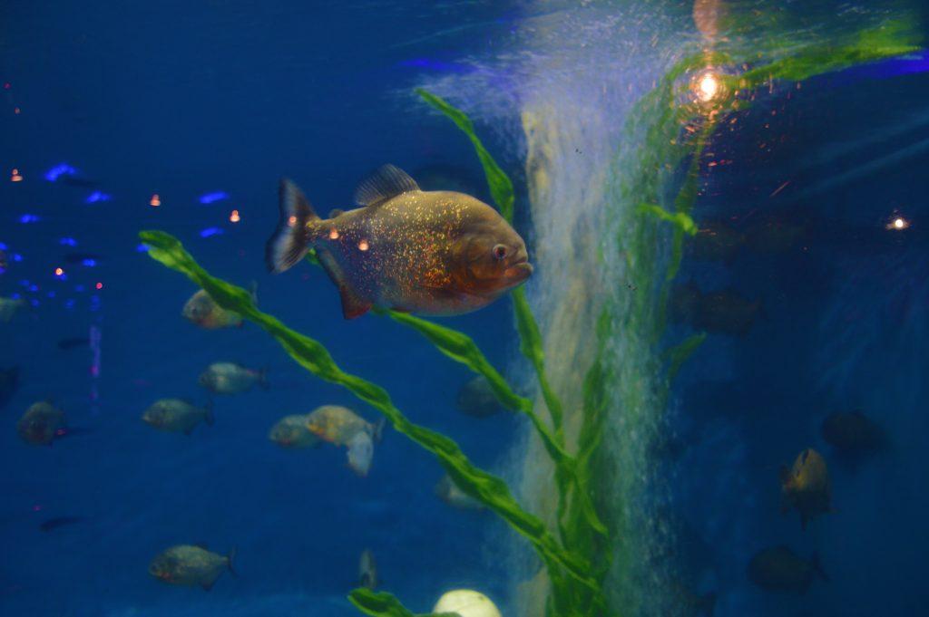 Kuala Lumpur Aquaria KLCC