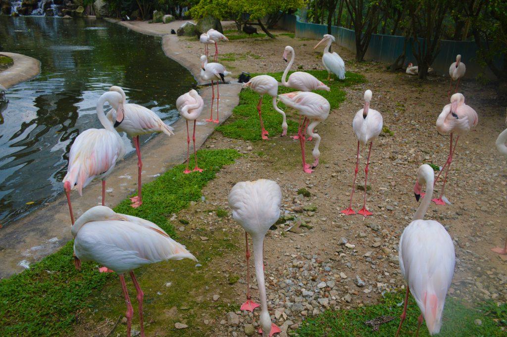 Kuala Lumpur KL Bird Park
